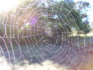orb-spider-web (1)