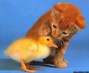 Kindness-cat-and-bird