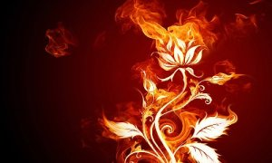 the-blossoming-of-creative-fire-white-flower-and-flame